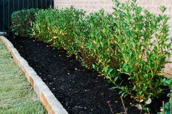 Refreshing your mulch for your garden beds every year will help maintain the gardens appeance and health.