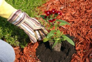 flower-bed landscaping-mulching-coppell-texas