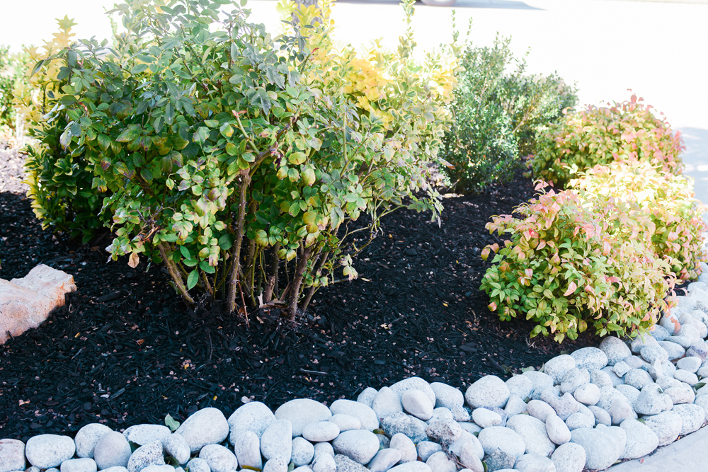 river rock border landscaping